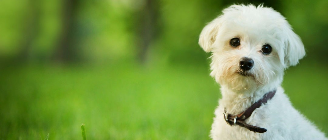 Why Having A Dog Is Good For Your Health