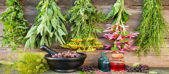 Guide To Herbal Medicine